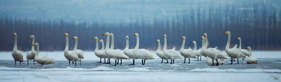 三门峡天鹅湖